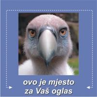 Oglas - BLEF